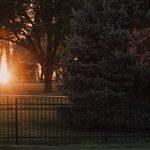 táblás kerítés és naplemente fákkal